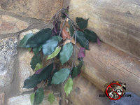 Fake ficus plant coming from a flying squirrel hole in a house in Lincolnton, Georgia