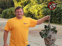 Smiling technician displaying a hornets nest with the branch it was built on