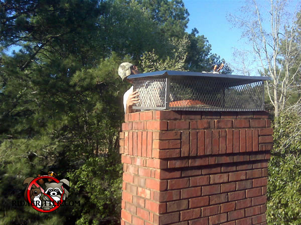 Installing a chimney cap to keep animals out of a house.