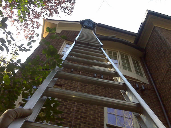 Dean on a ladder removing flying squirrels from a home