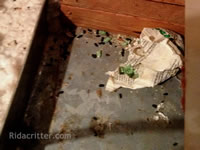 Mouse poison and droppings in an attic