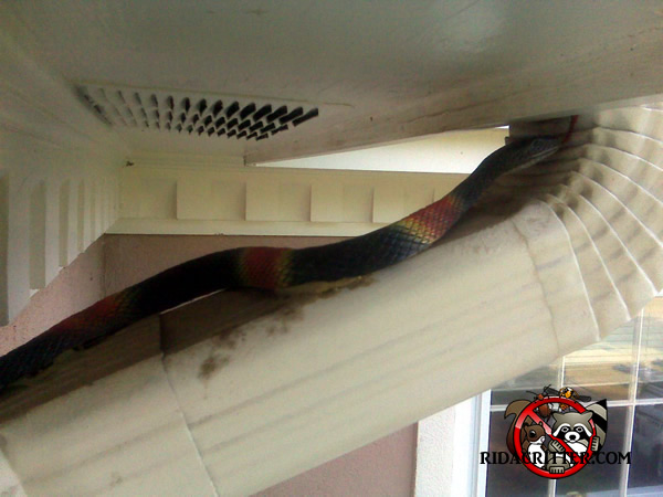 Rubber snake that one of our customers thought was real